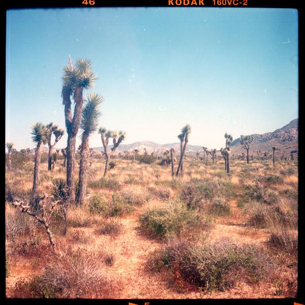 hi desert, exkursion - Pieces of Berlin - Book and Blog