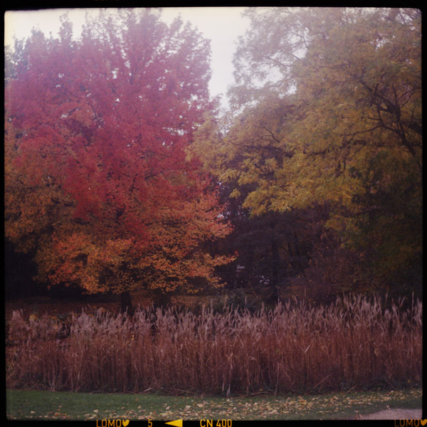 tiergarten, herbst, c-print, berlin - Pieces of Berlin - Collection - Blog