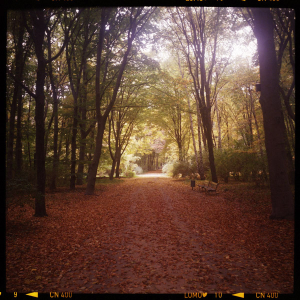 tiergarten, park, c-print, berlin - Pieces of Berlin - Collection - Blog